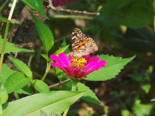 Zivot u prirodi: leptir i cvet
